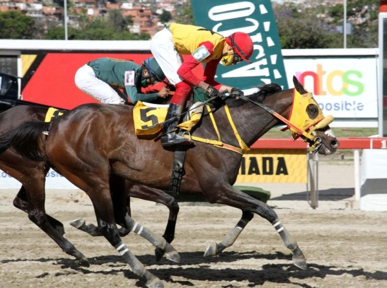 Dazzling will continue his campaign in Caracas